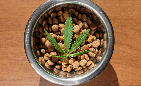 You can put a dropper of CBD oil into your pet's food.