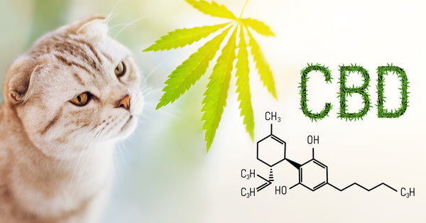 CBD topicals and CBD creams are great for pets who don't like the taste of CBD.