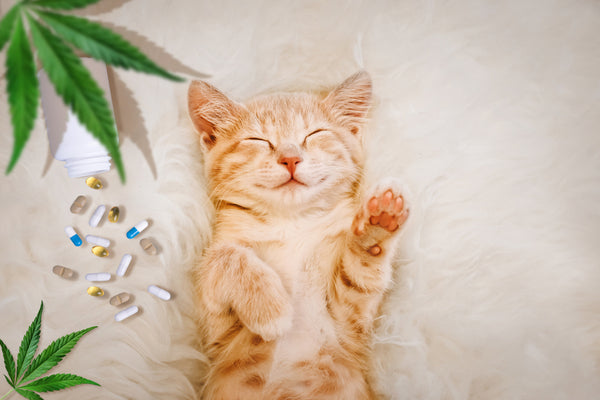 Your pet can benefit from the relaxing effects of CBD.