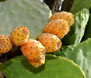 Prickly Pear Jam (sugar free)