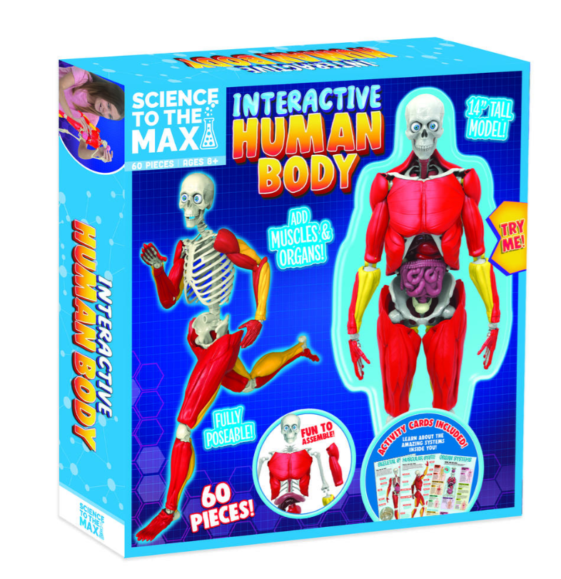 Interactive Human Body - STEM