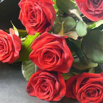 Six Red Roses Gift Wrapped