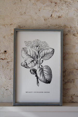Flower Market Collection- Botanicals Sign