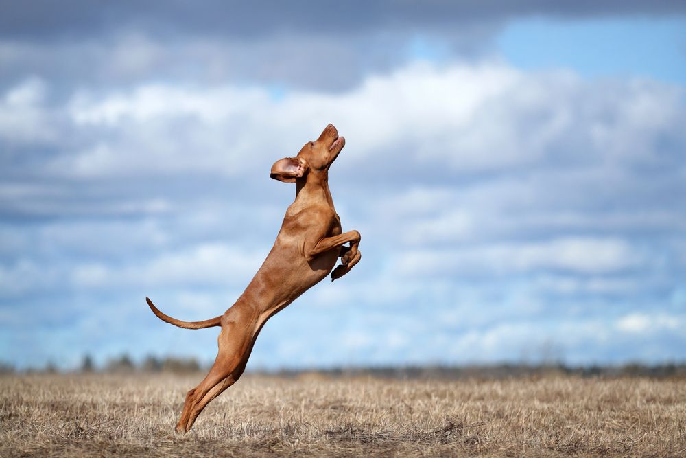 Feeding a High-Energy Dog: What You Really Need to Know
