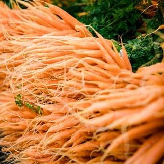 Bunched Carrots - from the farm