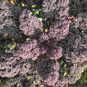 Black Kale - from the farm