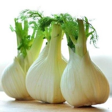 Fennel (each)