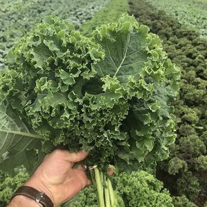 Green Borecole Kale - from the farm