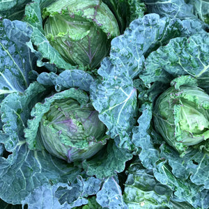 Jan King Cabbage - our own from the farm