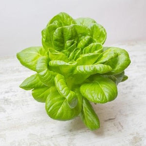 Little Gem Lettuce - 2 pack