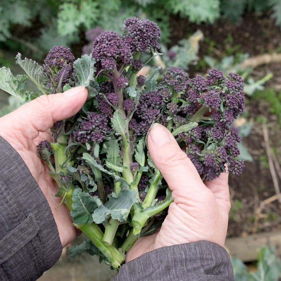 Purple Sprouting 200g- from the farm
