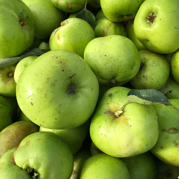 Windfall Bramley Apples