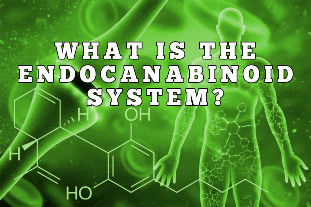 what is the endocanabinoid system