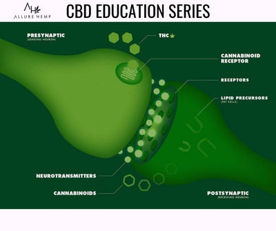 CBD Education Series - What You Should Know About CBD