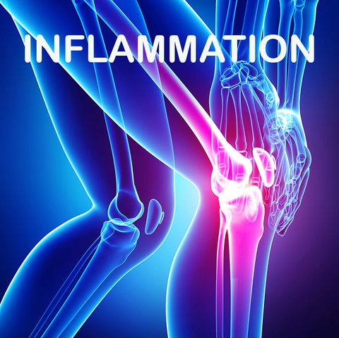 CBD Relieves the pain of Chronic Inflammation. Graphic image of someone holding and inflamed knee joint – text 'INFLAMMATION'