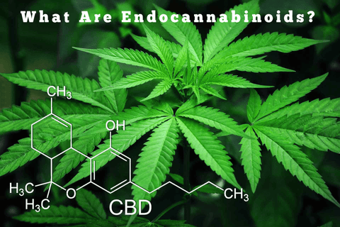 what are endocannabinoids