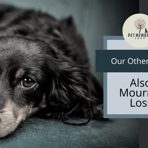Our Other Pets Also Mourn a Loss