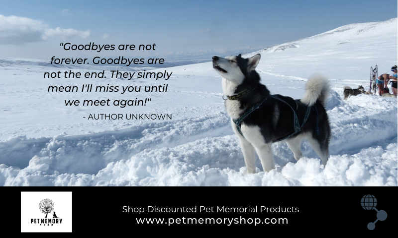 51 Pet Loss Quotes To Boost Your Spirits