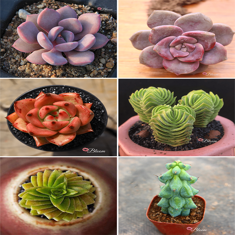 Top Selling Succulents Set Of 6