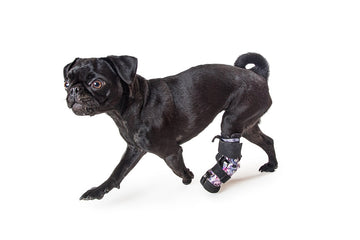 Custom-Made Prosthetics for Dogs