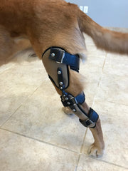 4 Benefits of Dog Knee Braces