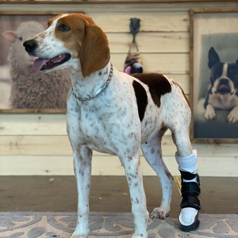 Custom Animal Tarsal (Ankle/Hock) Brace