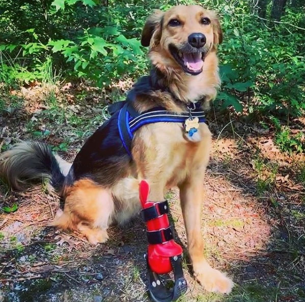 Canine Partial Limb Prosthetic
