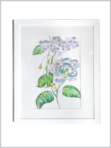 Hydrangea Botanical : Original Art