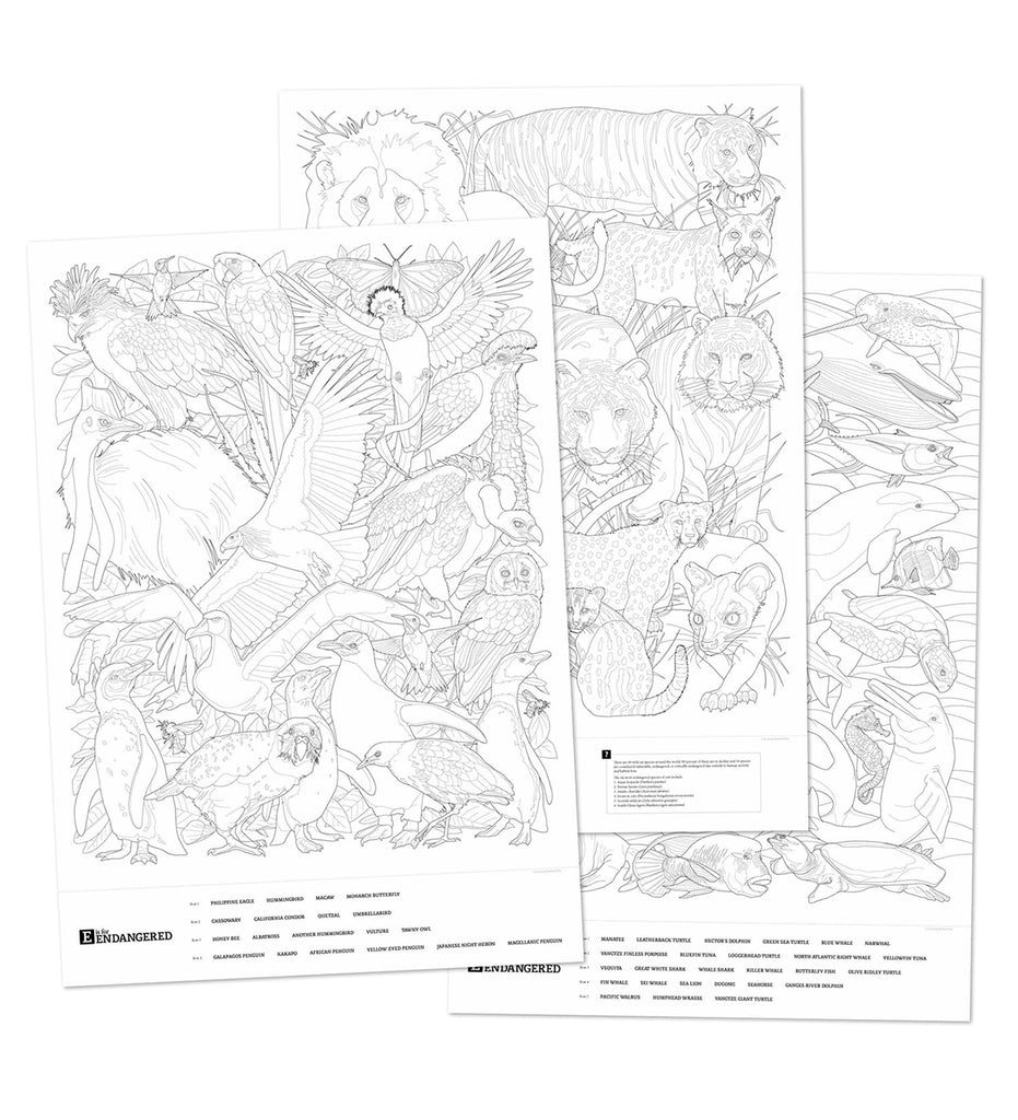 Young woman coloring the Beautiful Birds giant coloring poster.