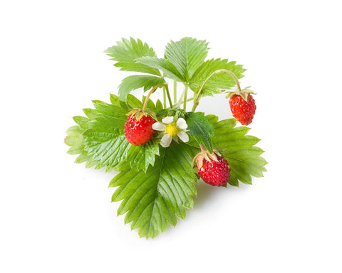 Click&Grow© Wild Strawberry Plant Pods