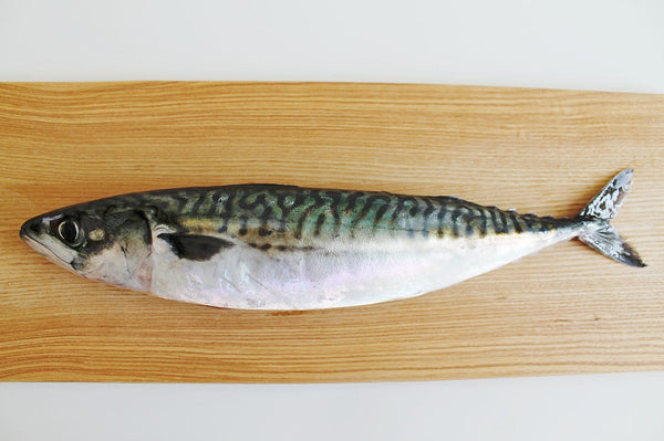 Mackerel WHOLE