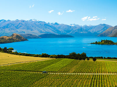 Everything You Need to Know About New Zealand