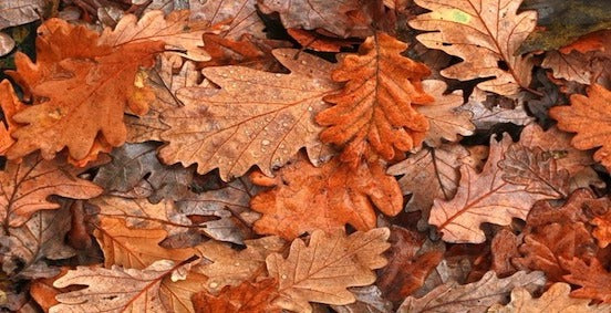 The value of fallen leaves in autumn