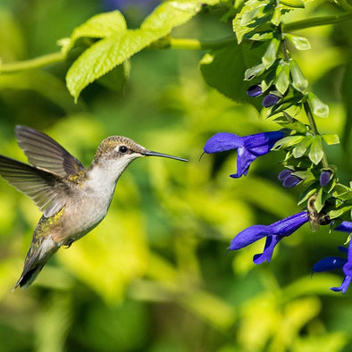 6 Native Plants That Will Attract Hummingbirds to Your Regional Garden