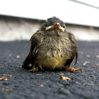 What to Do When You Find a Baby Bird Outside Its Nest