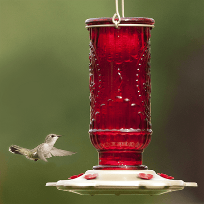 Where to Hang Your Hummingbird Feeders