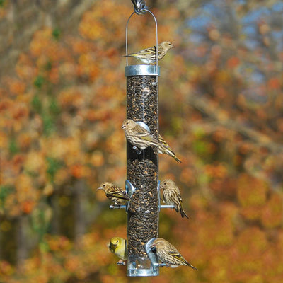 Where to Hang Seed Feeders for Birds