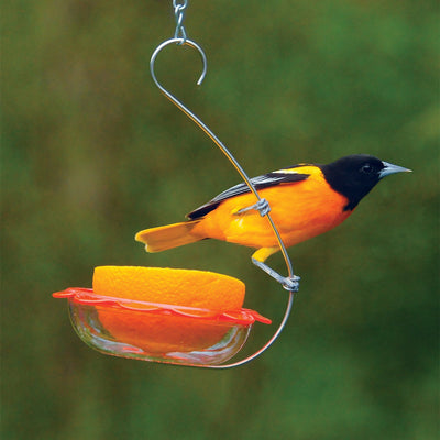 10 Best Foods for Bird Feeding