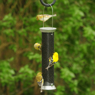 8 Helpful Hints for Attracting Finches