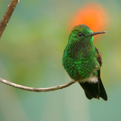 12 Amazing Facts You Should Know About Hummingbird Migration