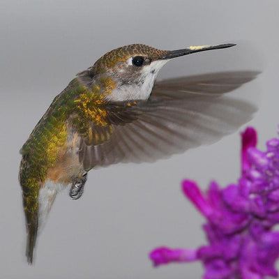Tips for Choosing the Perfect Hummingbird Feeder