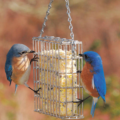The Dos and Don'ts of Offering Suet to Birds