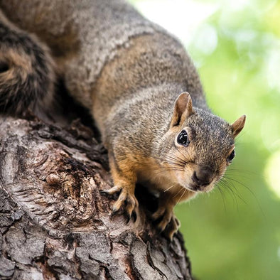 How to Successfully Squirrel-Proof Your Bird Feeders