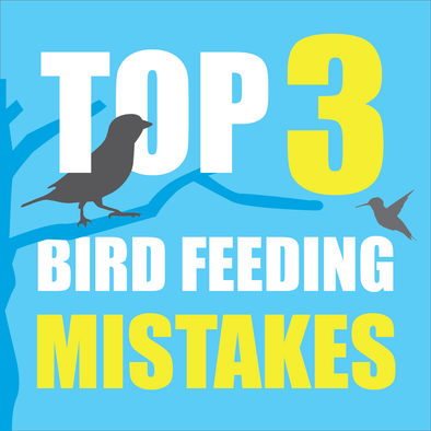Top 3 Worst Bird Feeding Mistakes