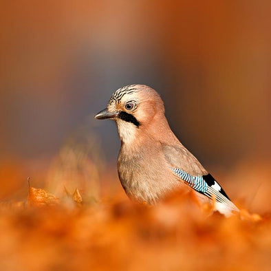 Leave Those Leaves! Better Autumn Landscaping for Birds