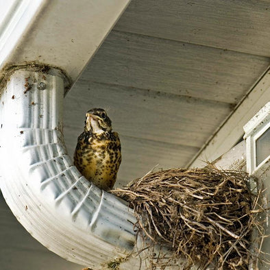 How to Remove a Bird Nest Safely and Legally