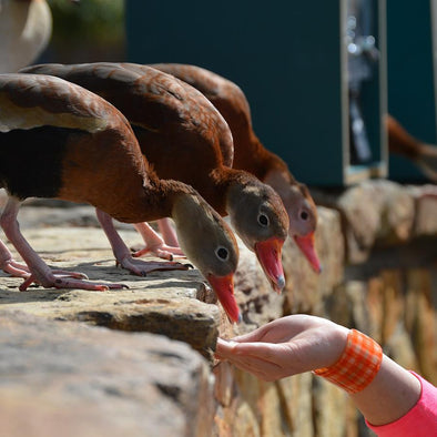 Should You Let Your Kids Feed Ducks and Geese?
