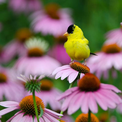 How to Plant the Perfect Birdseed Garden