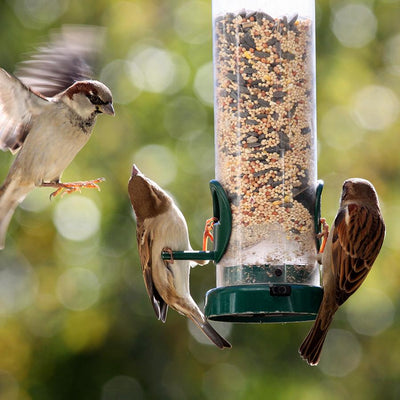 Deterring Sparrows from Bird Feeders with Halos
