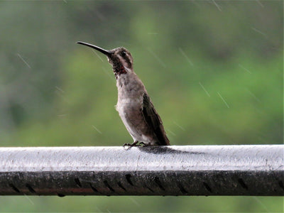 5 Ways to Protect Bird Feeders from Rainstorms